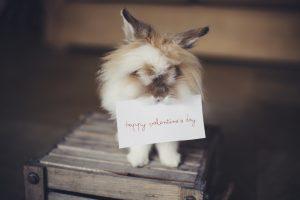 valentin napi állatos képek, nyuszi