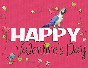 valentin napi állatos képek, papagáj